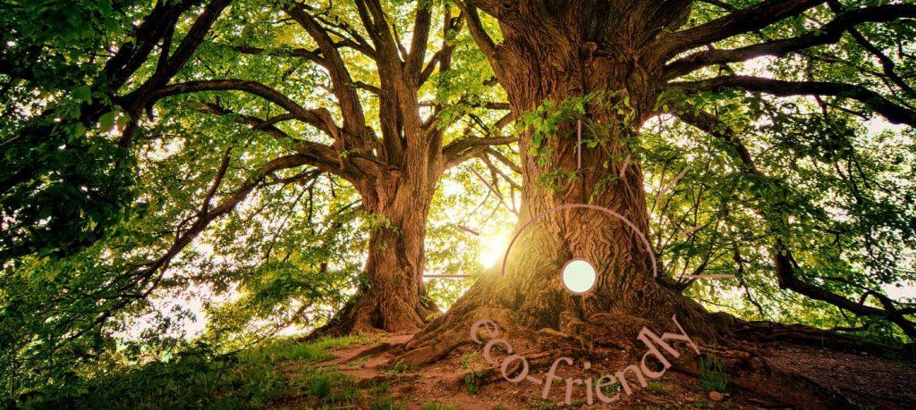 ecofriendly banner page magnifiques arbres gorgeous trees