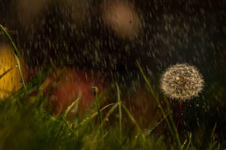 rainy days - jours de pluie