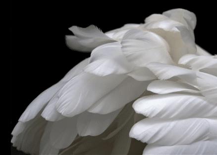 Le deuil périnatal, un tabou français
