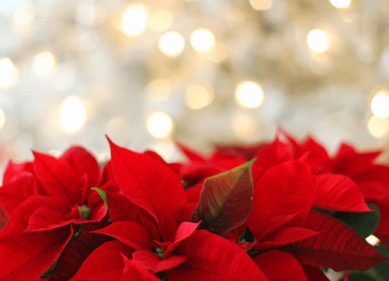 Liste Noël Christmas list